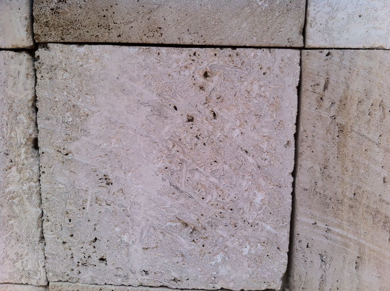 Buy Mexican Shell Stone Limestone United States